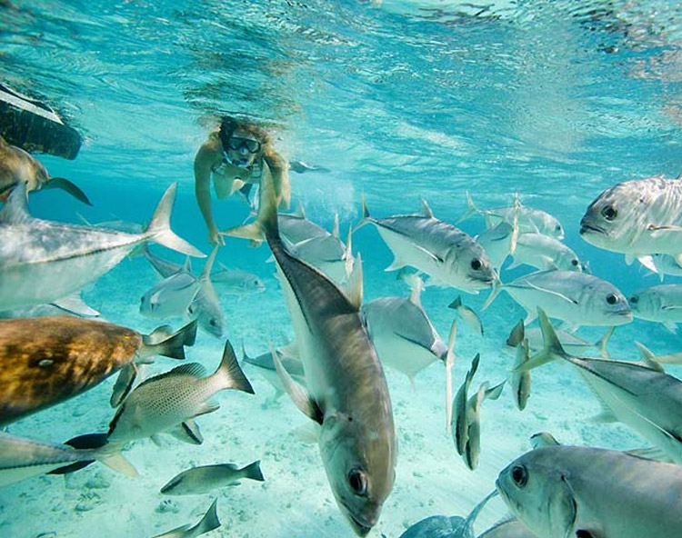 mexico rocks and tres cocos snorkeling tour