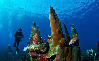 Diving package with our San Pedro Ambergris Caye Belize Beach Resort